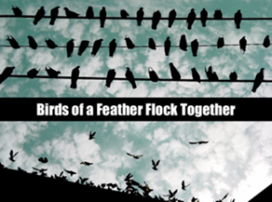 birds_of_a_feather_436753